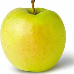 Подарок осени сорт яблони